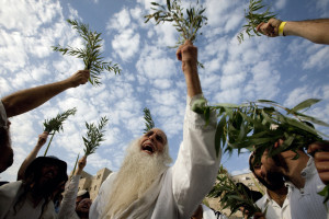 Rabbi Menahem Furman and his followers hold willows as they pray for rain and mercy during the last day of the Jewish festival of Sukkot at the Western Wall in the old city of Jerusalem October 9, 2009. AFP PHOTO/MENAHEM KAHANA (Photo credit should read MENAHEM KAHANA/AFP/Getty Images)