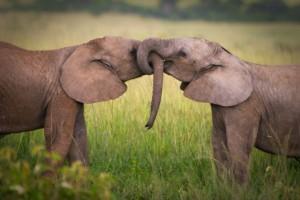 animal-mating-habits-592x394